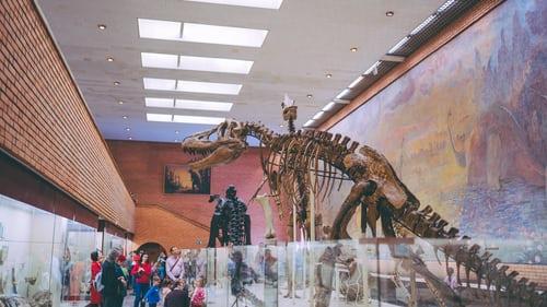 Quels sont les 5 plus impressionnants fossiles de dinosaures ?