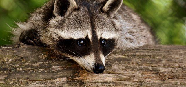 Un sujet particulier : la capture des animaux