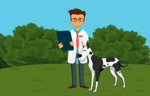 phytothérapie animaux