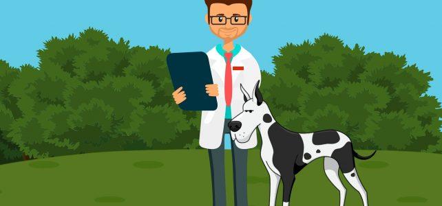 L'usage de la phytothérapie vétérinaire pour le soin des animaux