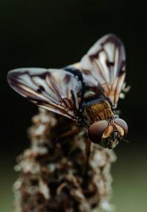 Eloigner les insectes de votre maison